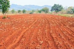 Plantación de la mandioca. Fotos de archivo libres de regalías