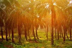 Plantación de la palma Imagen de archivo libre de regalías