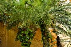 Plantación de la palma de aceite Foto de archivo