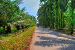 Plantación de la palma de petróleo Imagenes de archivo