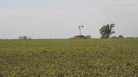 Plantación de la soja en el campo de Argentina metrajes