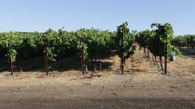 Plantación de la uva de Napa Valley almacen de metraje de vídeo