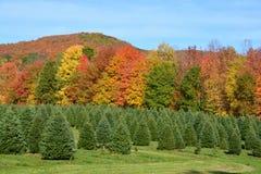 Plantación de los árboles de navidad Imagen de archivo libre de regalías