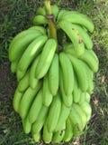 Plantación de plátano Foto de archivo