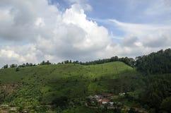 Plantación de té Imagenes de archivo