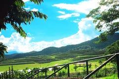 Plantación de té, Chaingrai, Tailandia, Asia Foto de archivo libre de regalías