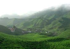Plantación de té con niebla imagenes de archivo