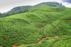 Plantación de té de la montaña Nuwara Eliya, Sri Lanka Fotos de archivo