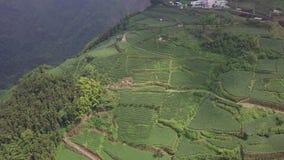 Plantación de té en área de montañas de Alishan, Taiwán Silueta del hombre de negocios Cowering almacen de video