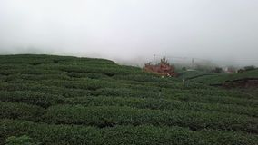 Plantación de té en el área de Alishan, Taiwán Visión aérea en niebla densa almacen de metraje de vídeo