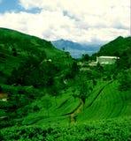 Plantación de té en Munnar, estado de la India - de Pallivasal y fábrica del té Fotografía de archivo libre de regalías