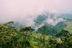 Plantación de té en niebla Foto de archivo