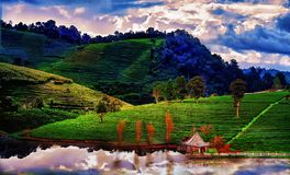 Plantación de té en primavera, cielo azul y nube nunca vista fotos de archivo libres de regalías