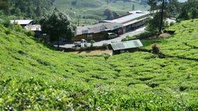 Plantación de té en Puncak fotografía de archivo libre de regalías
