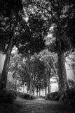 Plantación de té de Wonosari Malang, Indonesia Foto de archivo
