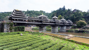 plantación de té y puente del viento y de la lluvia de Chengyang foto de archivo libre de regalías