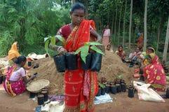 Plantación del árbol Fotografía de archivo