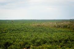 Plantación del aceite de palma fotografía de archivo libre de regalías