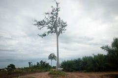 Plantación del aceite de palma fotografía de archivo