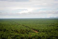 Plantación del aceite de palma fotos de archivo libres de regalías