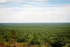 Plantación del aceite de palma imágenes de archivo libres de regalías