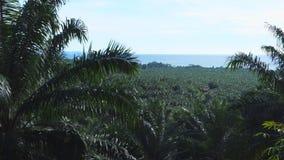 Plantación del aceite de palma en New Britain almacen de metraje de vídeo