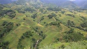 Plantación del arroz metrajes