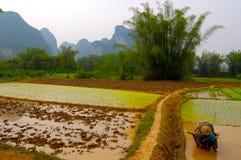 Plantación del arroz en China Fotos de archivo libres de regalías