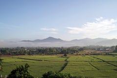 Plantación del campo del arroz imágenes de archivo libres de regalías