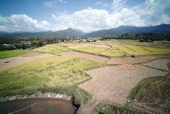 Plantación del campo del arroz imagen de archivo