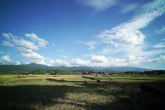 Plantación del campo del arroz imagen de archivo libre de regalías