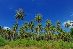 Plantación del coco Fotografía de archivo