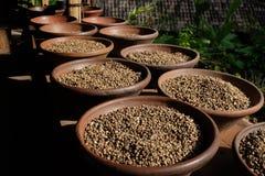 Plantación del grano de café Imagen de archivo libre de regalías