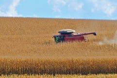 Plantación del maíz Imagen de archivo libre de regalías