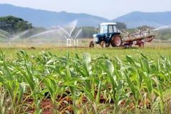 Plantación del maíz forrajero Fotografía de archivo libre de regalías