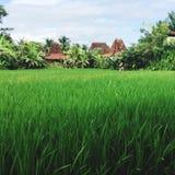 ¡Plantación en Tailandia hermosa! imagen de archivo