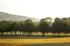 Plantación maderera anaranjada Fotografía de archivo libre de regalías