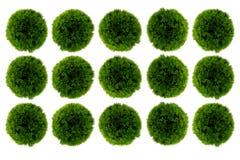 Plantación verde Fotografía de archivo libre de regalías