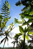 Plantación verde Foto de archivo libre de regalías