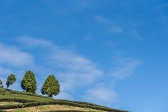 Plantación y bosque de té en las montañas foto de archivo libre de regalías