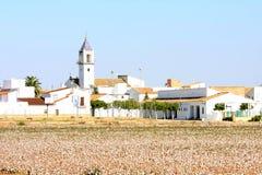 Plantación de algodón cerca del EL Viar en Andaluc3ia, España Imagen de archivo