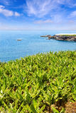 Plantación de plátano cerca del océano en el La Palma Fotos de archivo