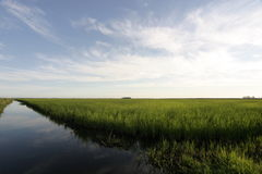 Plantación del arroz Foto de archivo libre de regalías
