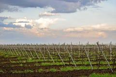 Plantaciones de alta tecnología modernas de viñedos en primavera temprana imagen de archivo libre de regalías