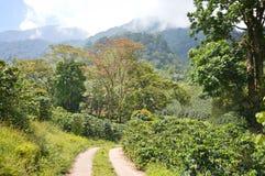 Plantaciones de café en las montañas de Honduras occidental de Santa Barbara National Park imagenes de archivo
