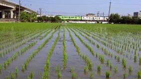 Plantaciones de la agricultura del arroz verde y del tren que pasan en el fondo Taiwán almacen de metraje de vídeo