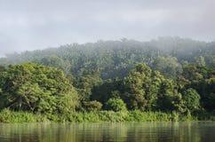 Plantaciones de la palma Imagen de archivo
