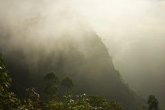 Plantaciones de té de Sri Lanka Foto de archivo libre de regalías