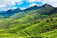 Plantaciones de té en Kerala, la India Foto de archivo libre de regalías