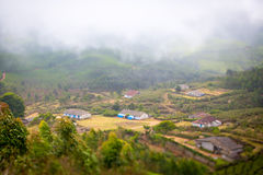 Casas en el medio de una plantación de té Fotos de archivo